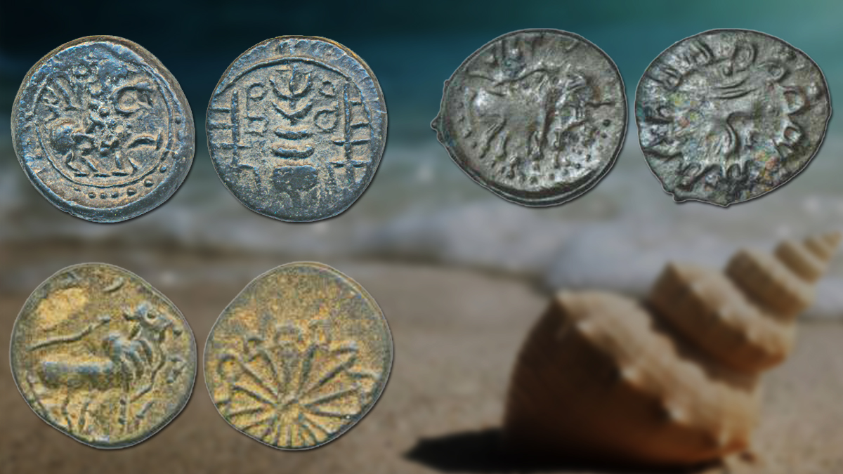 conch shell vintage coins